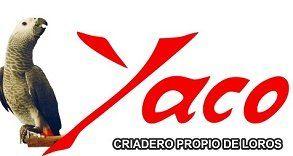 Tienda de loros Criadero Yaco - Criadero y venta de loros